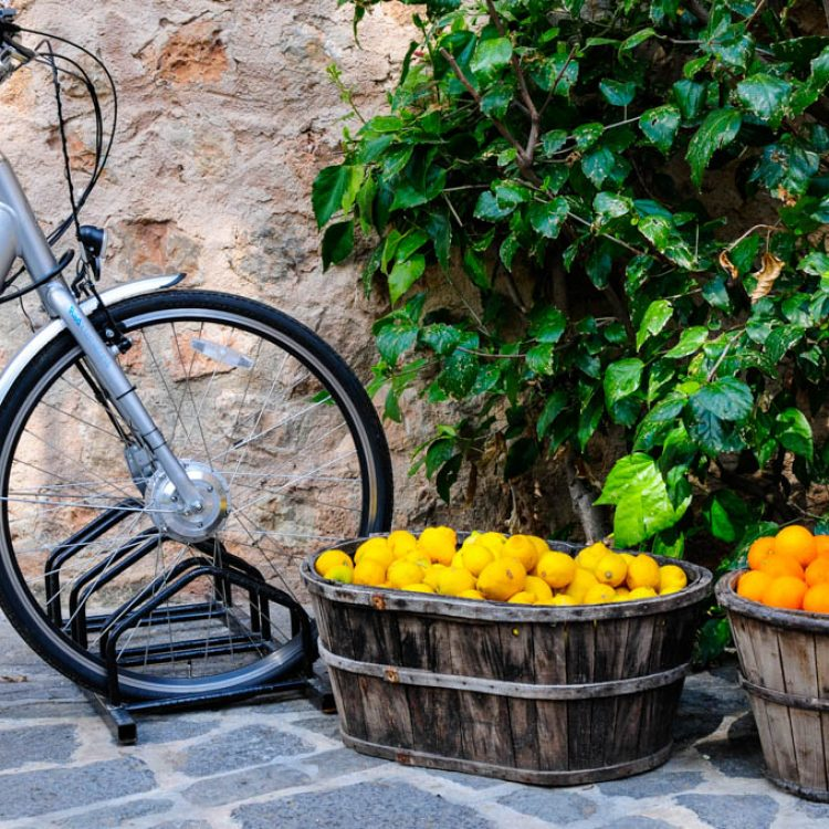 Bike tour to a vineyard + wine tasting